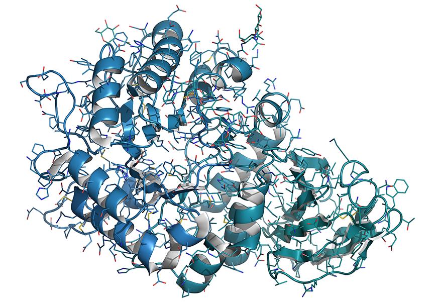 Alpha-galactosidase